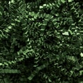 Shamrock Crinkle Cut™ Shred, Forest Green