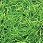Shamrock Veryfine Cut™ Shred, Lime Green