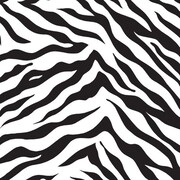 "Shamrock 24""W Zebra Stripes Gift Wrap, Black on White"