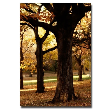 Trademark Fine Art Ariana Moshayedi 'Park' Canvas Art