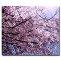 Trademark Fine Art Ariane Moshayedi 'Cherry Blossom Flare' Canvas Art 35x47 Inches