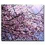 Trademark Fine Art Ariane Moshayedi 'Cherry Blossom Flare'