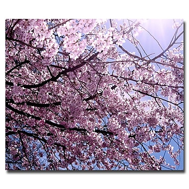 Trademark Fine Art Ariane Moshayedi 'Cherry Blossom Flare' Canvas Art 18x24 Inches