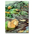Trademark Fine Art Ariane Moshayedi 'Coconut Jungle' Canvas Art 16x24 Inches