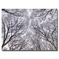 Trademark Fine Art Ariane Moshayedi 'Look Up' Canvas Art 30x47 Inches