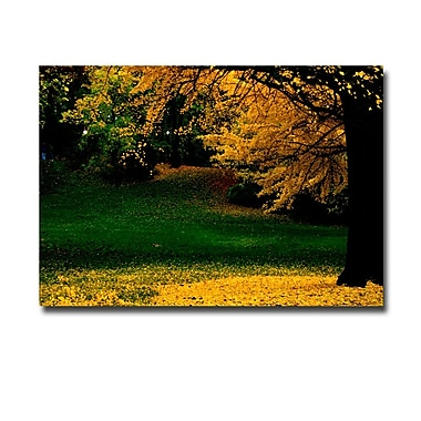 Trademark Fine Art Ariane Moshayedi 'All Fall Down' Canvas Art 16x24 Inches