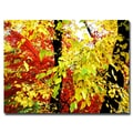 Trademark Fine Art Ariane Moshayedi 'Foliage' Canvas Art