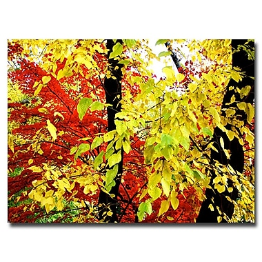 Trademark Fine Art Ariane Moshayedi 'Foliage' Canvas Art 30x47 Inches