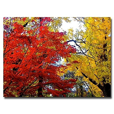 Trademark Fine Art Ariane Moshayedi 'Fall Mashup' Canvas Art