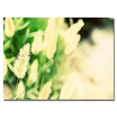 Trademark Fine Art Ariane Moshayedi 'Beach Flower' Canvas Art