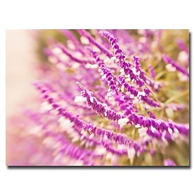 Trademark Fine Art Ariane Moshayedi 'Lavender' Canvas Art 16x24 Inches