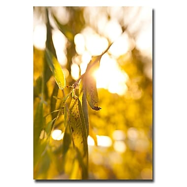 Trademark Fine Art Ariane Moshayedi 'Green Leaf' Canvas Art 16x24 Inches