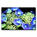 Trademark Fine Art Ariane Moshayedi 'Hydrangea' Canvas Art 22x32 Inches