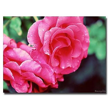 Trademark Fine Art Ariane Moshayedi 'Rose Dew' Canvas Art 16x24 Inches