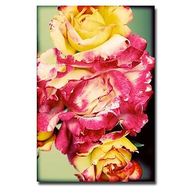 Trademark Fine Art Ariane Moshayedi 'Rustic Roses' Canvas Art 30x47 Inches