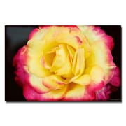 Trademark Fine Art Ariane Moshayedi 'Yellow Rose' Canvas Art 30x47 Inches