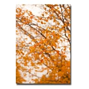 Trademark Fine Art Ariane Moshayedi 'Michigan Orange' Canvas Art 16x24 Inches