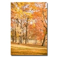 Trademark Fine Art Ariane Moshayedi 'Central Park Trees' Canvas Art 16x24 Inches