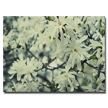 Trademark Fine Art Ariane Moshayedi 'Full Bloom' Canvas Art 16x24 Inches