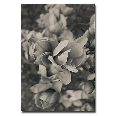 Trademark Fine Art Ariane Moshayedi 'BW Magnolias' Canvas Art 22x32 Inches
