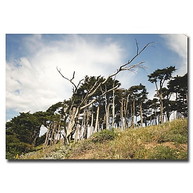 Trademark Fine Art Ariane Moshayedi 'Petrified Trees' Canvas Art 30x47 Inches