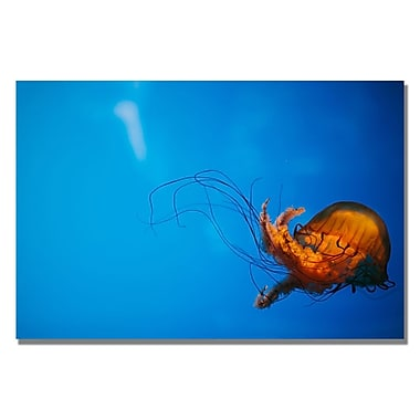 Trademark Fine Art Ariane Moshayedi 'Single Jellyfish' Canvas Art 16x24 Inches