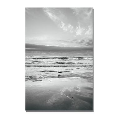 Trademark Fine Art Ariane Moshayedi 'Seagull Reflections' Canvas Art 16x24 Inches
