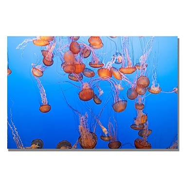 Trademark Fine Art Ariane Moshayedi 'Jellyfish III' Canvas Art 16x24 Inches