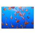Trademark Fine Art Ariane Moshayedi 'Jellyfish IV' Canvas Art 16x24 Inches