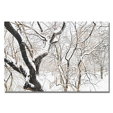 Trademark Fine Art Ariane Moshayedi 'Snowy Trees' Canvas Art 22x32 Inches