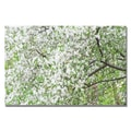 Trademark Fine Art Ariane Moshayedi 'Flowers in the Trees' canvas art 16x24 Inches