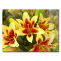 Trademark Fine Art Amy Vangsvard 'Lillies' Canvas Art