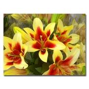 Trademark Fine Art Amy Vangsvard 'Lillies' Canvas Art