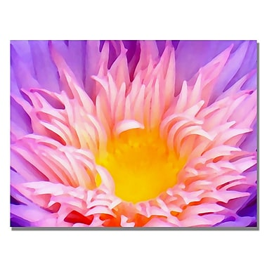 Trademark Fine Art Amy Vangsgard ' Lily Up Close' Canvas Art