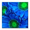 Trademark Fine Art Amy Vangsgard 'Blue Gerber Daisies' Canvas Art