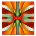 Trademark Fine Art Amy Vangsgard 'Tree Light Symmetry Red' Canvas 35x35 Inches