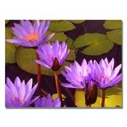 Trademark Fine Art Amy Vangsgard 'Water Lilies' Canvas Art