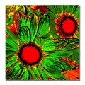 Trademark Fine Art Amy Vangsgard 'Pop Daisies III' Canvas 24x24 Inches