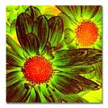 Trademark Fine Art Amy Vangsgard 'Pop Daisies V' Canvas 18x18 Inches