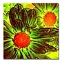 Trademark Fine Art Amy Vangsgard 'Pop Daisies V'