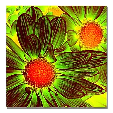 Trademark Fine Art Amy Vangsgard 'Pop Daisies V' Canvas 24x24 Inches
