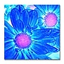 Trademark Fine Art Amy Vangsgard 'Pop Daisies VI'