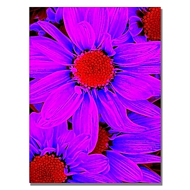 Trademark Fine Art Amy Vangsgard 'Pop Daisies IX' Canvas 35x47 Inches