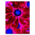 Trademark Fine Art Amy Vangsgard 'Pop Daisies XI' Canvas 35x47 Inches, AV0081-C3547GG