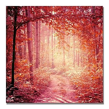 Trademark Fine Art Beata Czyzowska Young 'Enchanted Forest' Canvas Art