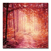 Trademark Fine Art Beata Czyzowska Young 'Enchanted Forest' Canvas Art