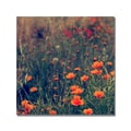 Trademark Fine Art Beata Czyzowska 'Field of Dreams' Canvas Art