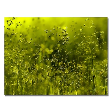 Trademark Fine Art Beata Czyzowska 'Symphony in Green' Canvas Art