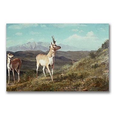 Trademark Fine Art Albert Biersdant 'Antelope' Canvas Art 35x47 Inches