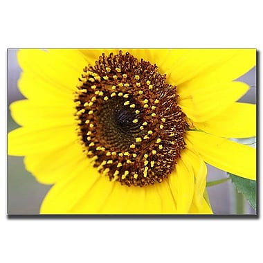 Trademark Fine Art Sunflower by Cary Hahn-Canvas Art Ready to Hang